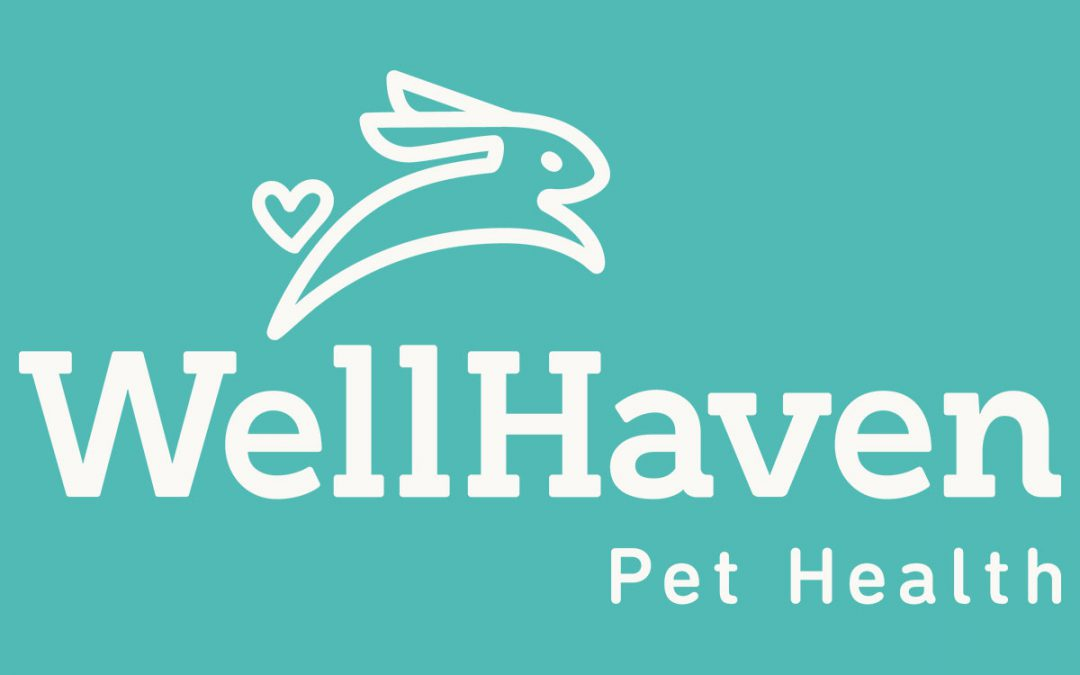 WellHaven Pet Health's Bob Lester Featured on AM NW