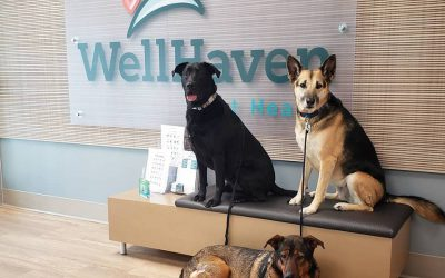 WellHaven Pet Health Family of Practices Announces Partnership with Fear Free